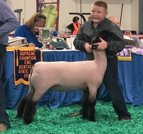 Crossbred Ewes - Kentucky State Fair Shown by Landon Hack
