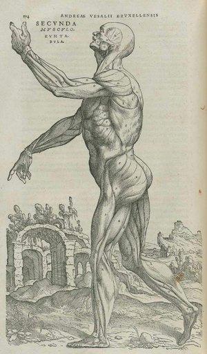Vesalius+Vanitas+Dissected.jpg