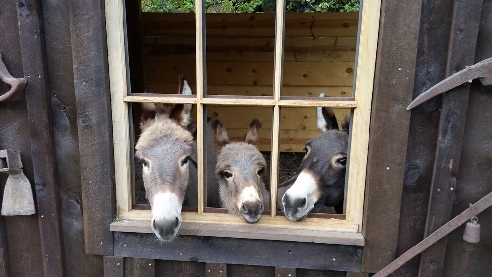 Cute burros.jpg