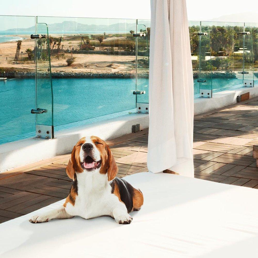 Enjoying pet-friendly Hotel El Ganzo.
