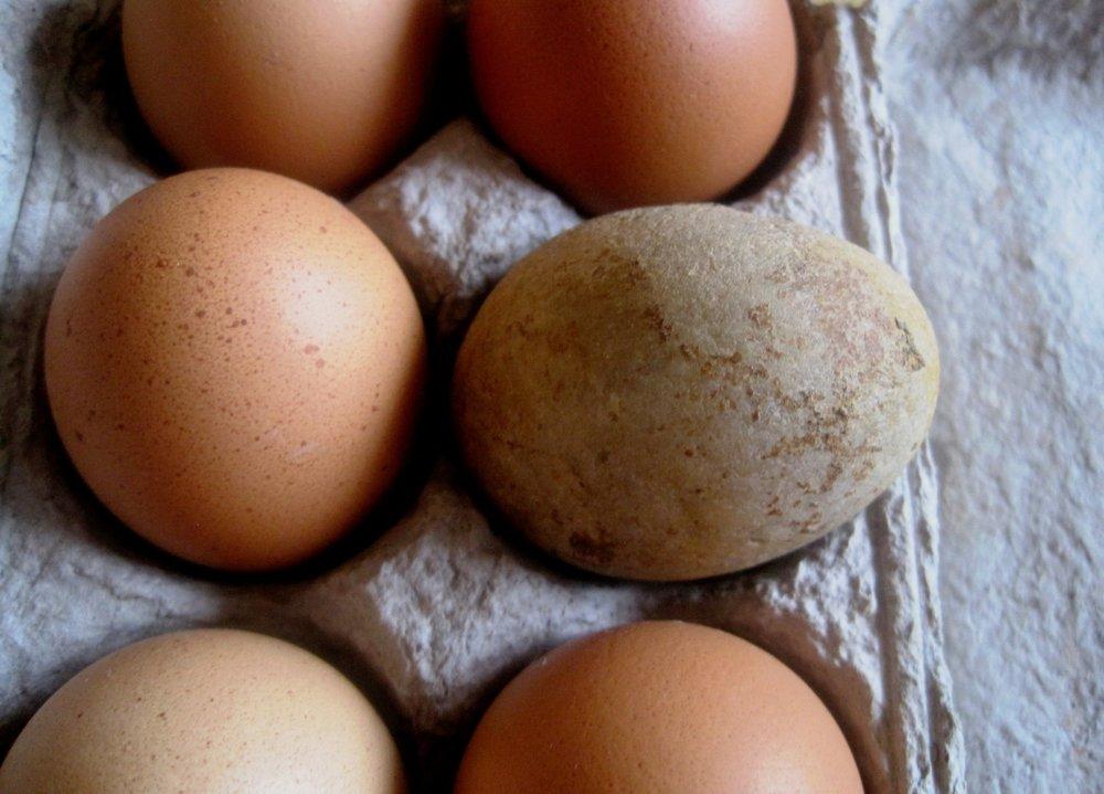 eggs-314762.jpg