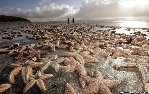 Are refugees like starfish, washed upon the shore?