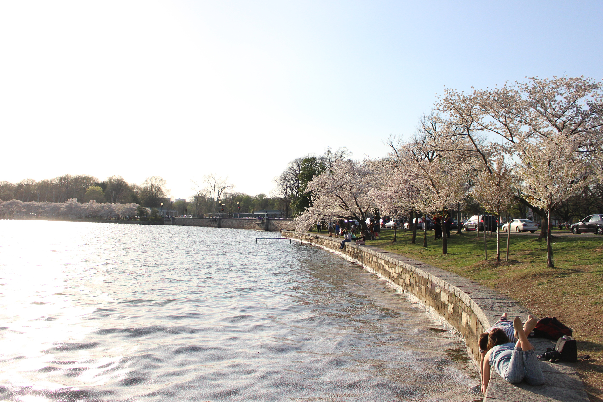 Cherry Blossoms DC 4.13.15 145