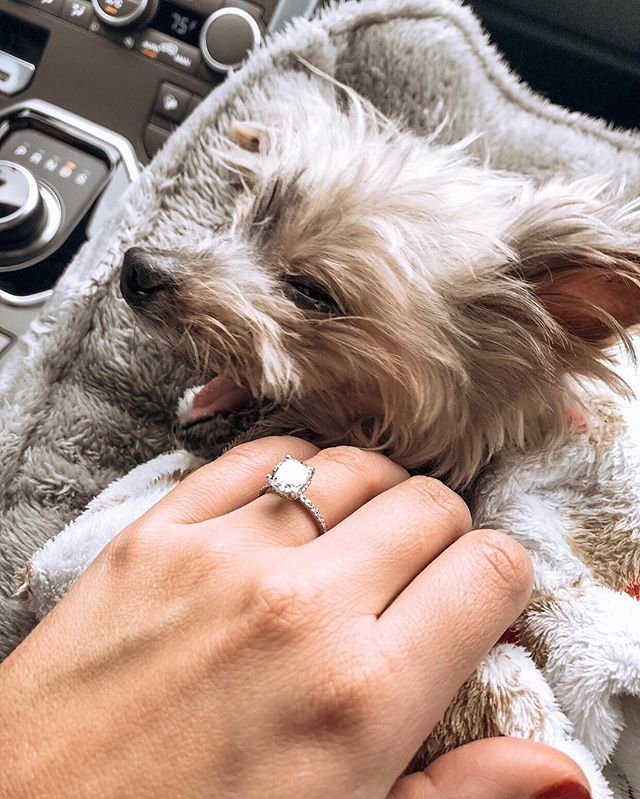 I was just going through pics and found this. This photo makes me so happy!! I think Ziggy had the best reaction to our engagement.😆☺️🐶❤️💍 ⠀⠀⠀⠀⠀⠀⠀⠀⠀ ••••• #engaged #bestfriend #furbaby #rip #imisshim #theknotrings #ringselfie #brides #bridesrealweddings #justsaidyes #weddingwire #yorkie #yorkiesofinstagram #engagementphotos #ido #fiance #bridetobe #engagementpics #theknot #misstomrs #isaidyes #engagementphoto #futuremrs #putaringonit #feyoncé #wifedup #engagementring #marriage #engagement #ringselfie