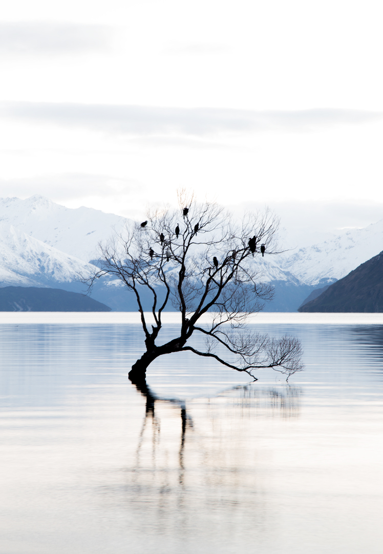 that-wanaka-tree.jpg
