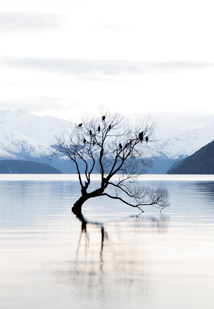 that-wanaka-tree.jpg