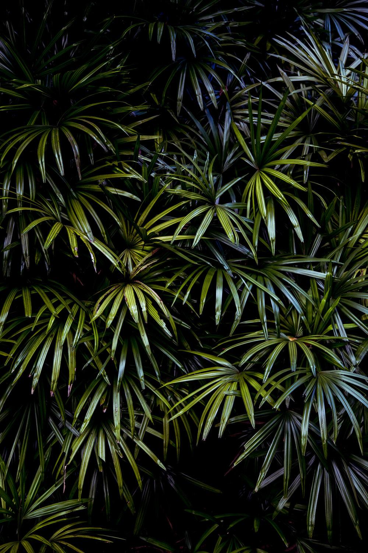 Singapore-botanics-js-1.jpg