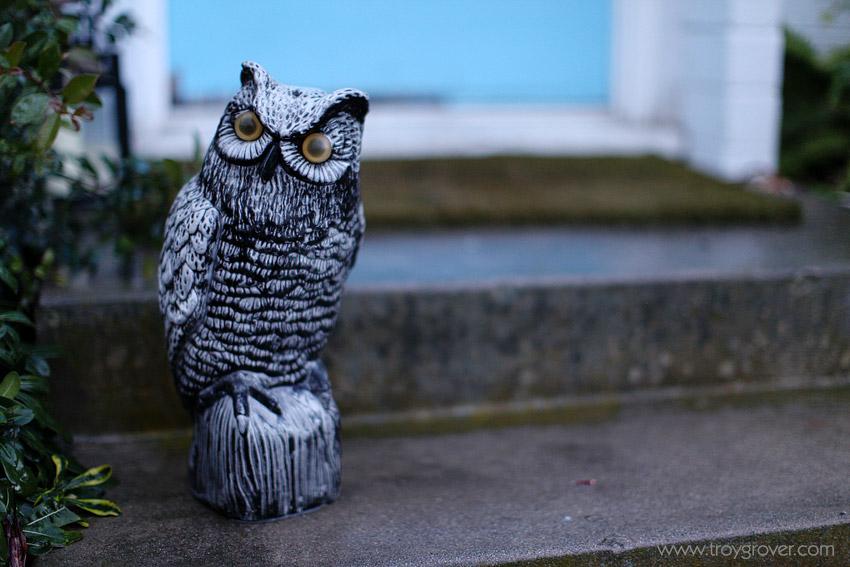 owl-orange-county