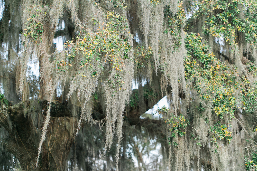 Magnolia-Plantation-Fine-Art-Photographer-27