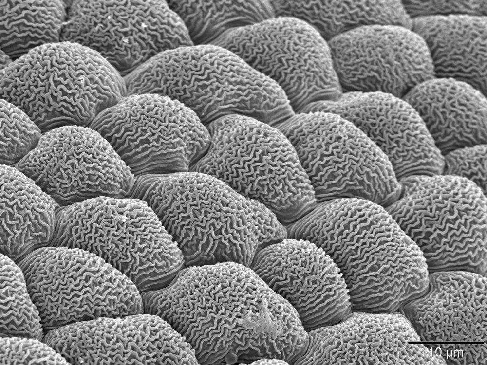 Flower nanoridge.
