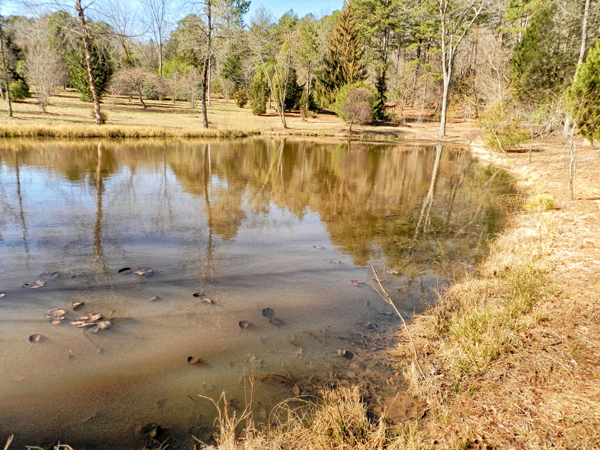 Large-Pond.png