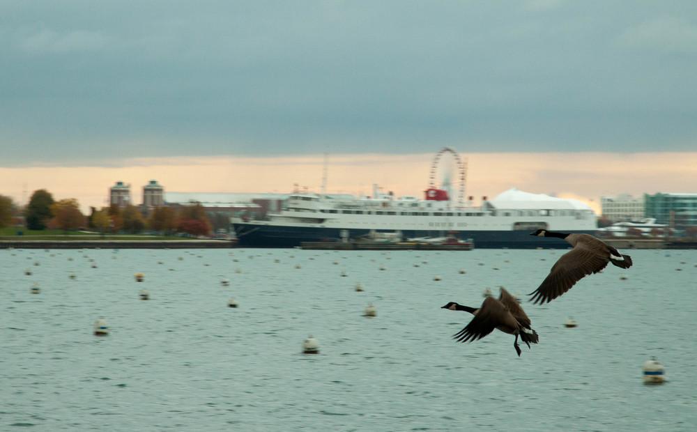 密歇根湖畔的飞鸟 心也飞了