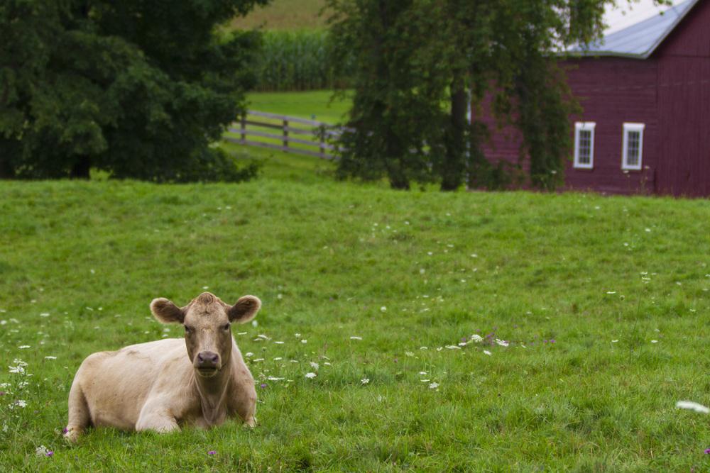 farm_chkchk07.jpg