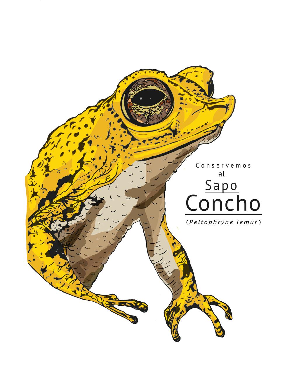 Salvemos al Sapo Concho