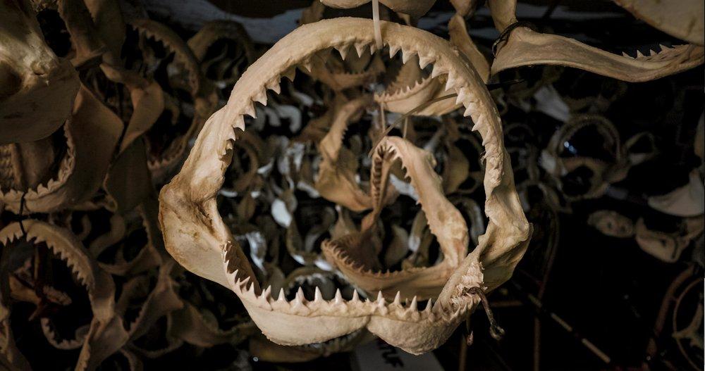 Sanctuary Sharks'  screen grab. (Canon 8-15mm F/2.8)