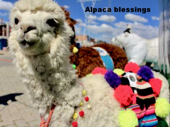 Blessing the alpaca and the hand knit KUSIKUY products.