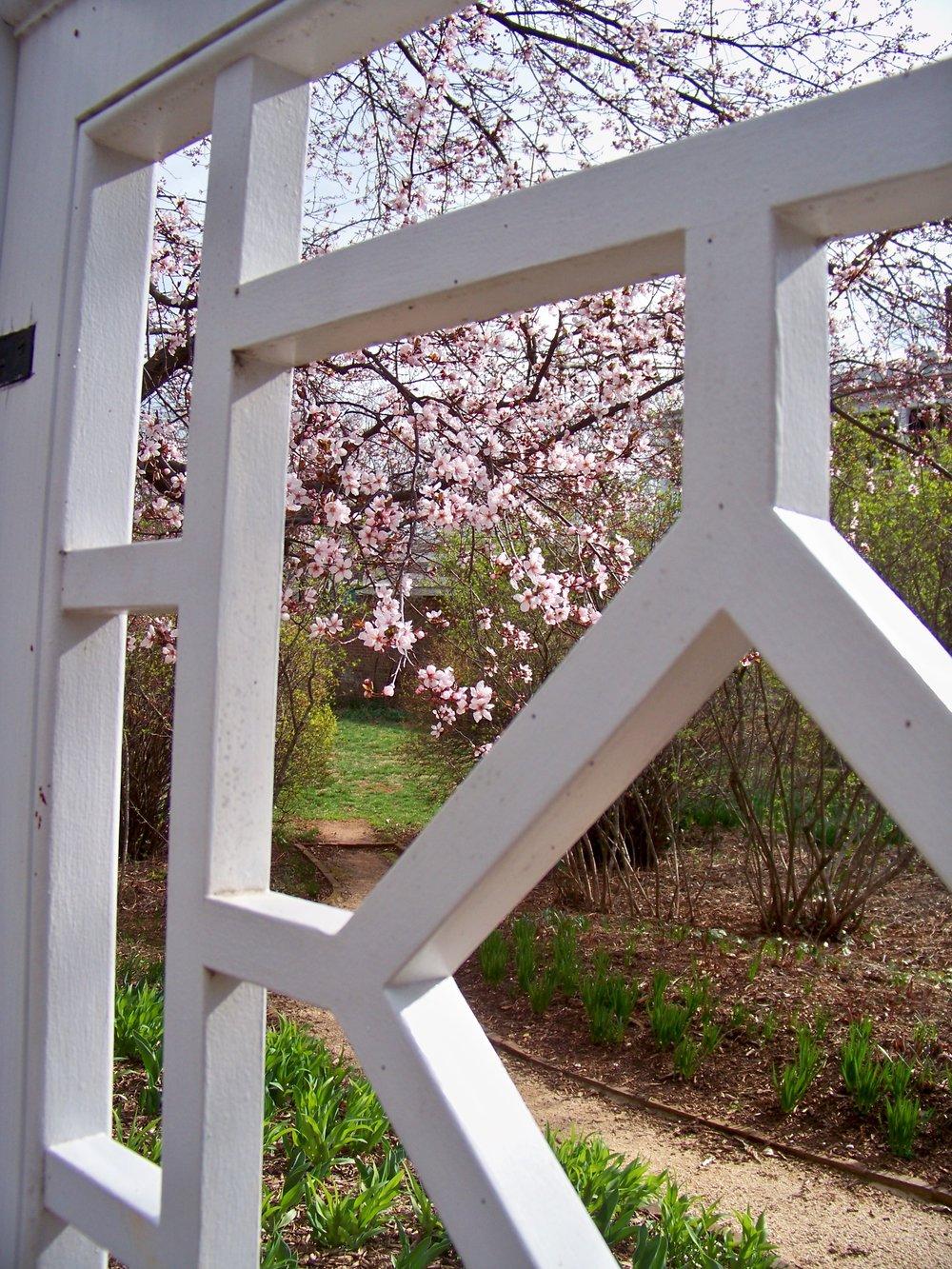 Spring_Musings-magnolia-gate.jpg