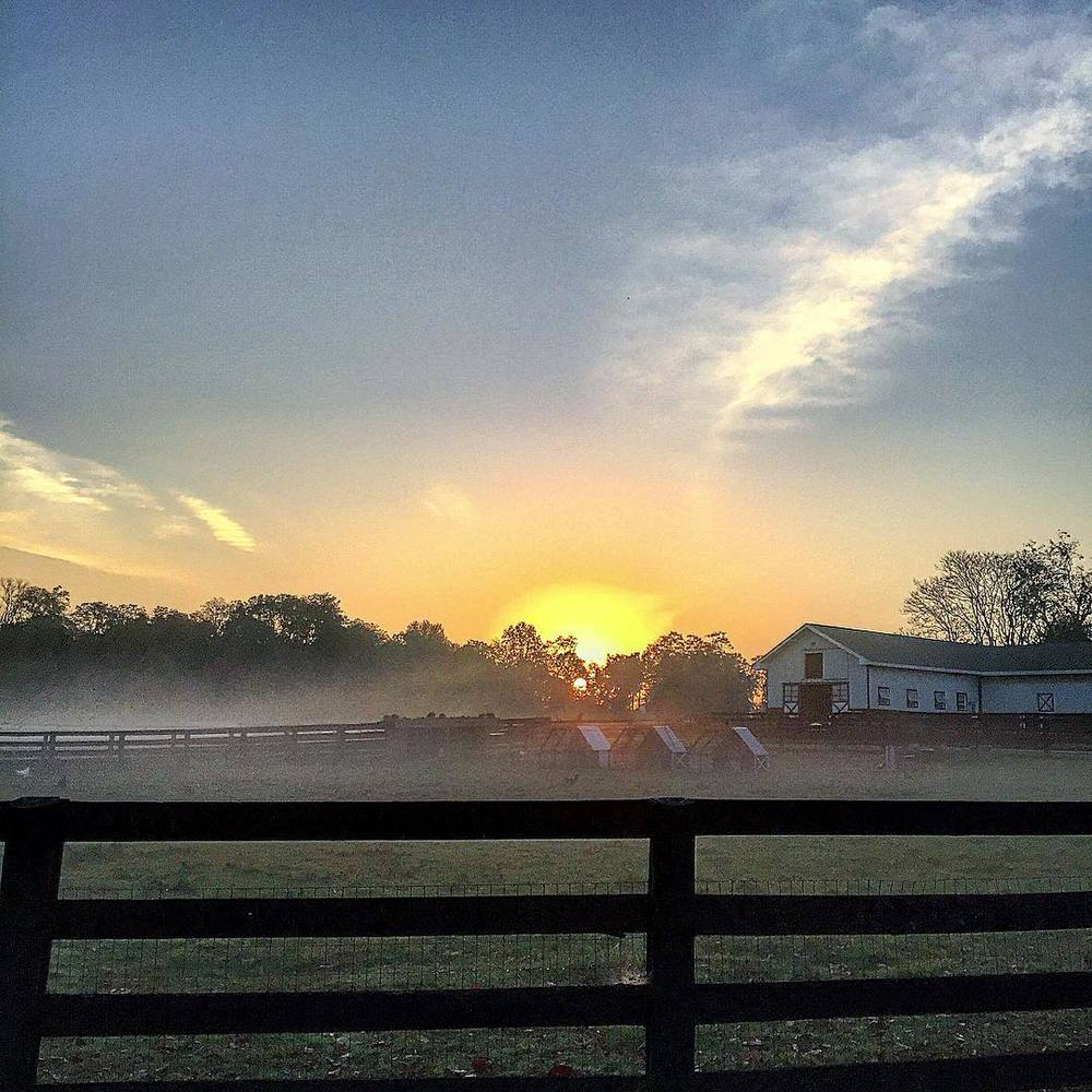Sunrise at Lakshmi Farms