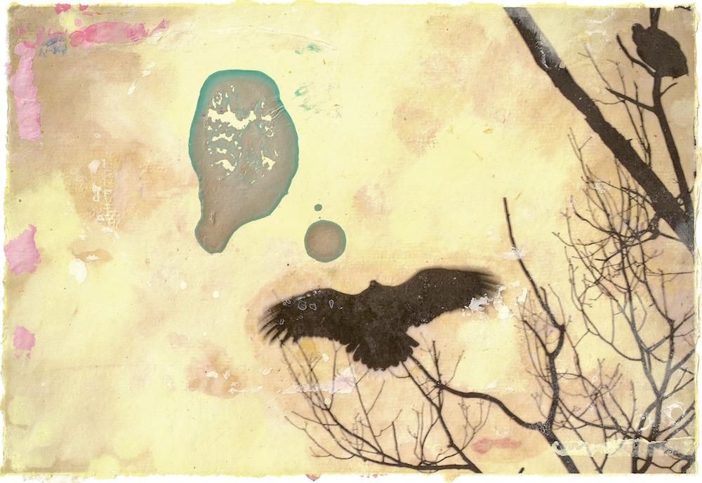 Vulture Sunning (II).jpg