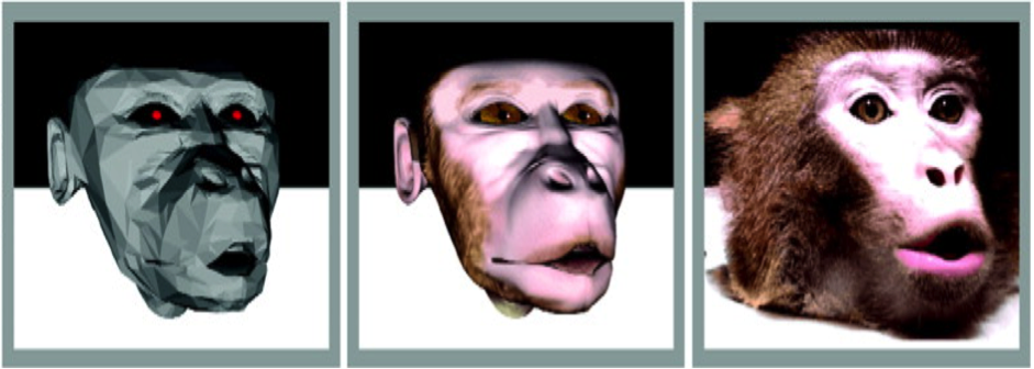 Monkey visual behavior  falls into the uncanny valley