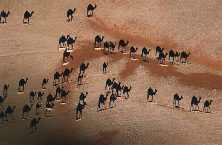 camels or shadows.png