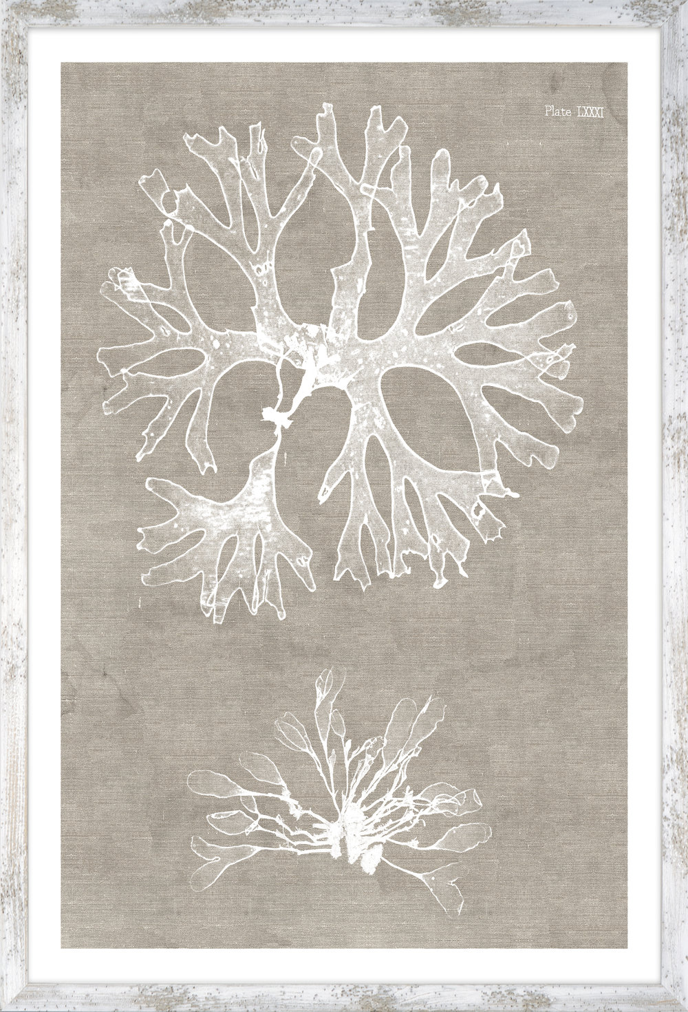 17611 Nature Printed on Linen II.jpg