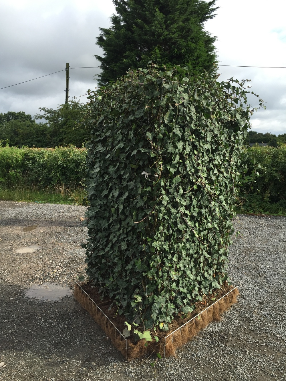 Ivy screens - £100 each or 3 for £250