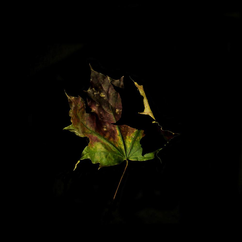 Leaf-4.jpg