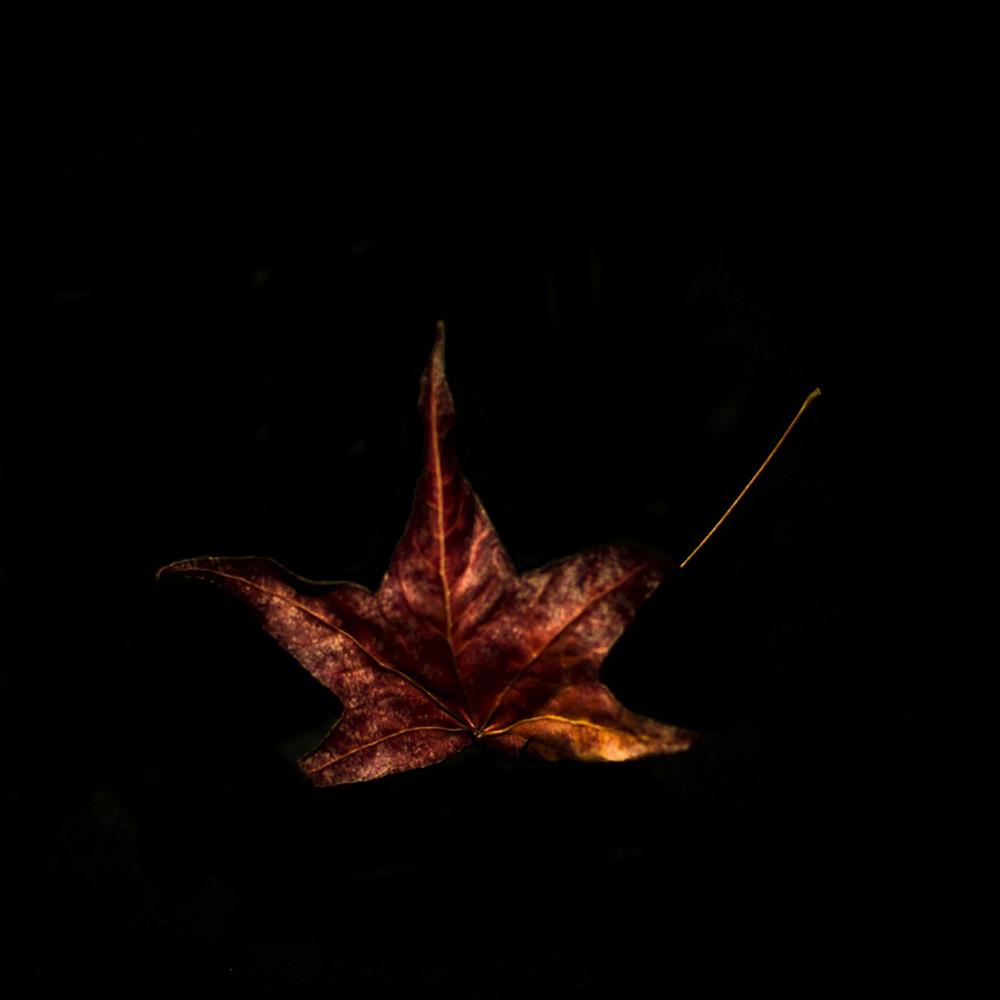 Leaf-10.jpg