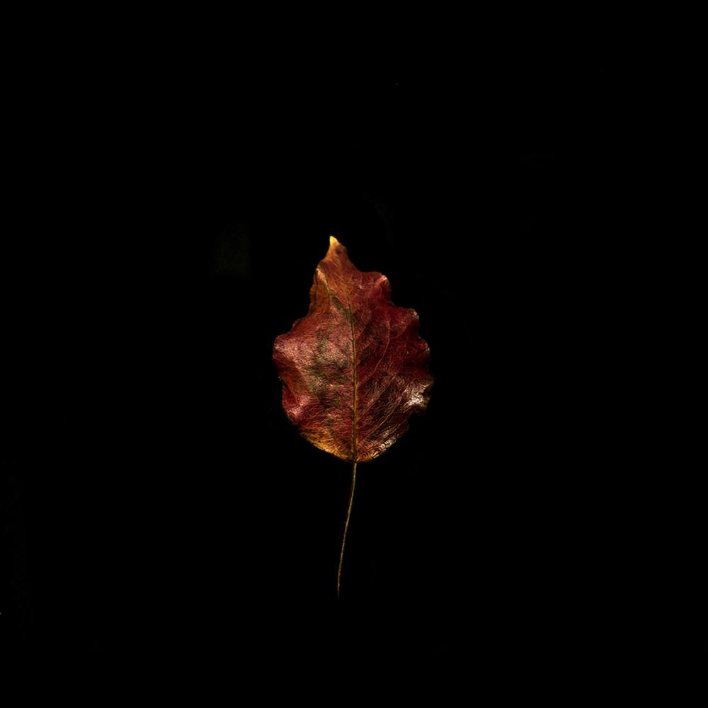 Leaf-11.jpg