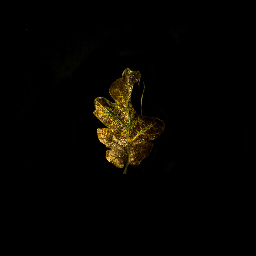 Leaf-12.jpg