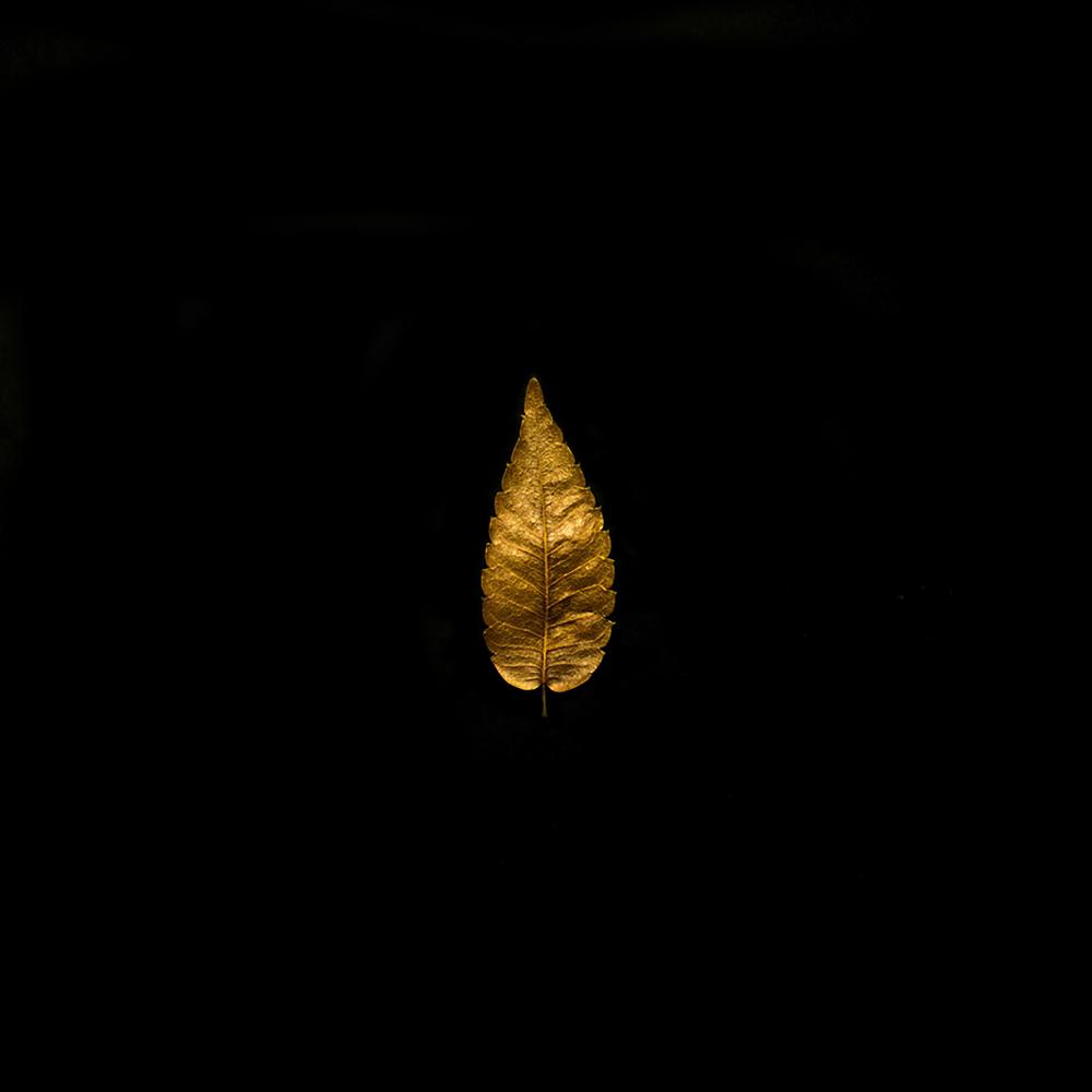 Leaf-18.jpg