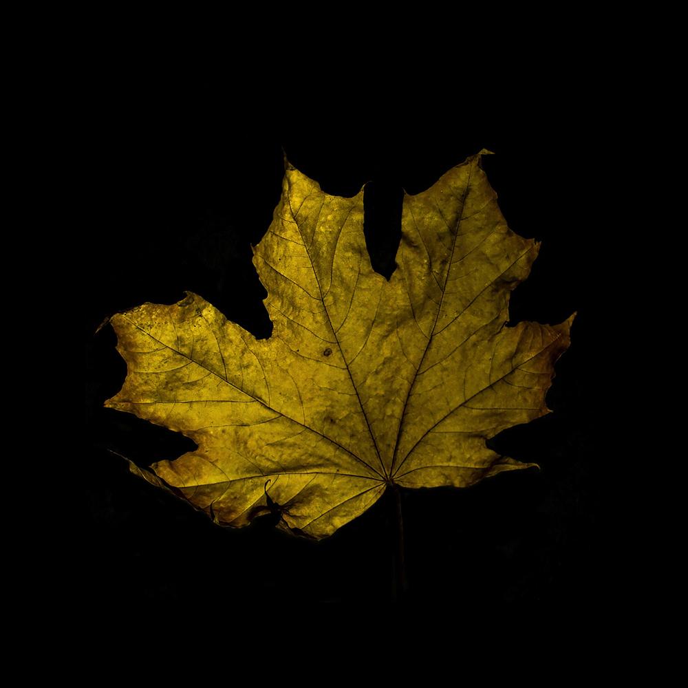 Leaf-17.jpg