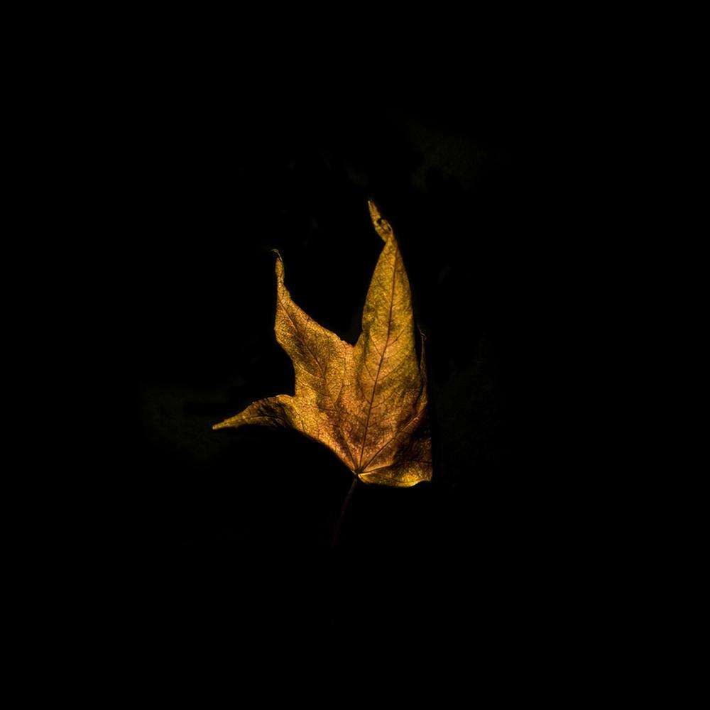 Leaf-20.jpg