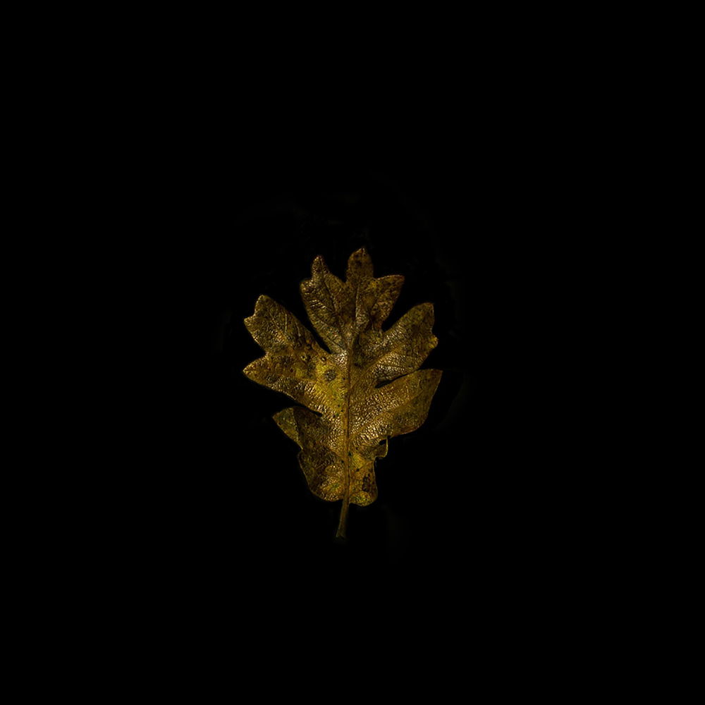 Leaf-22.jpg