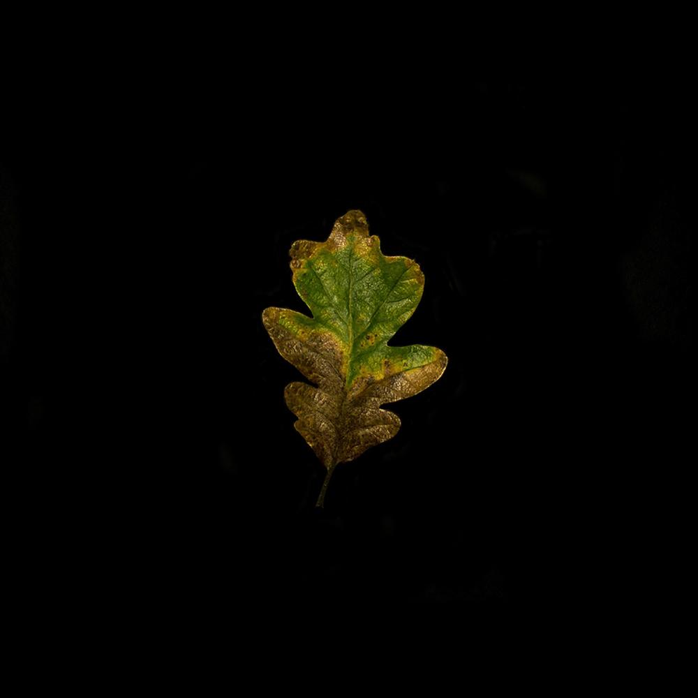 Leaf-25.jpg