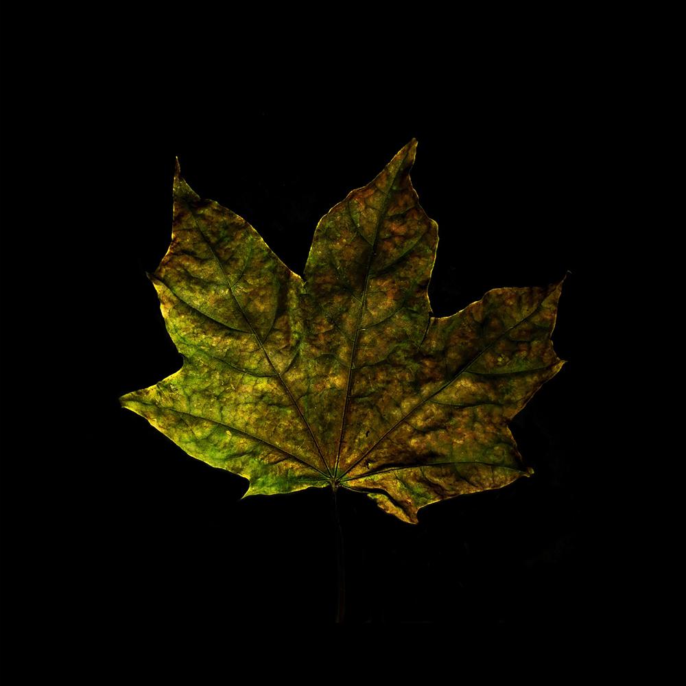 Leaf-24.jpg