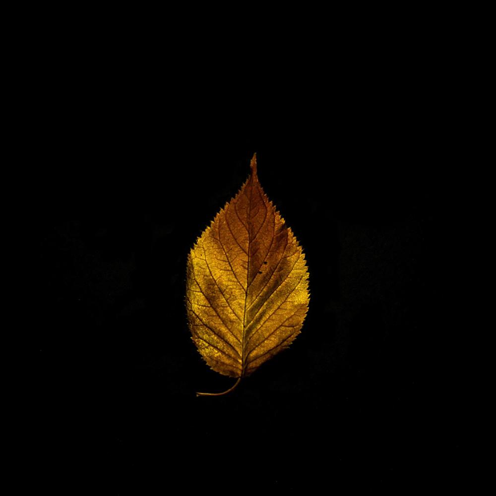 Leaf-28.jpg