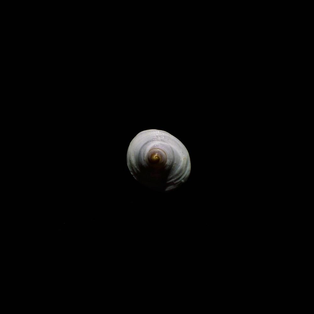 shell-11.jpg