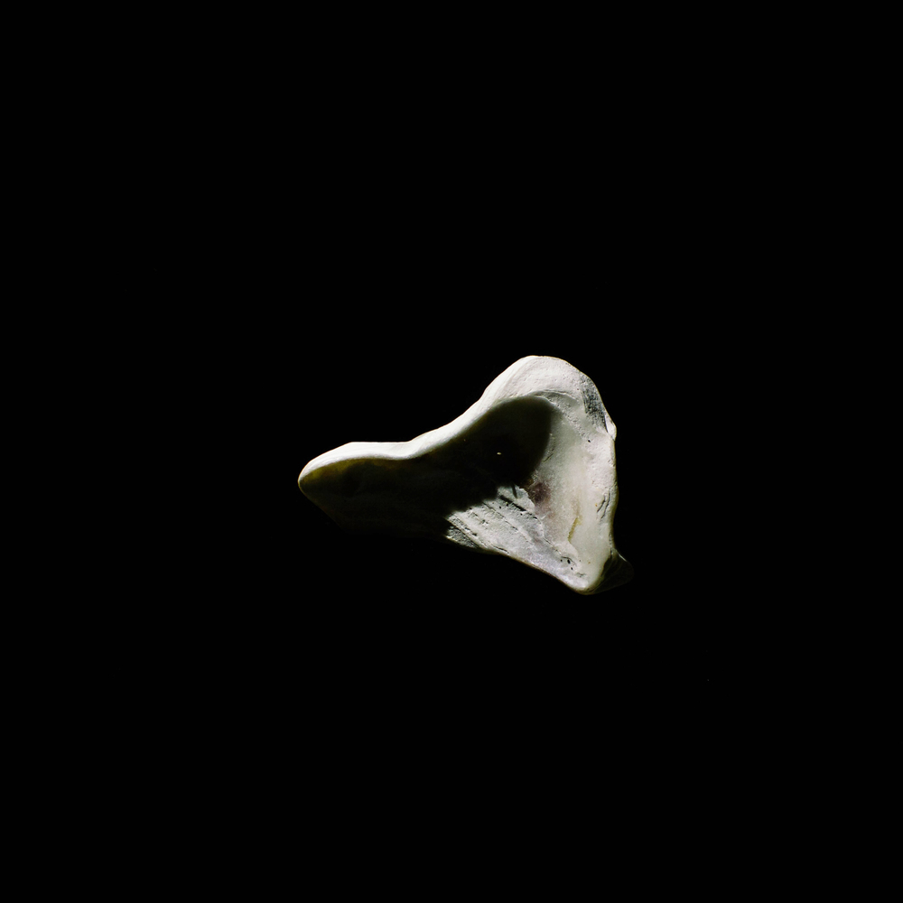shell-27.jpg