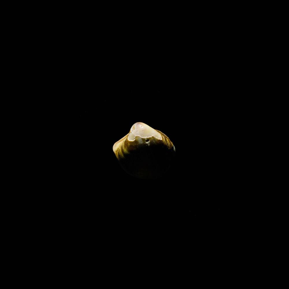 shell-28.jpg