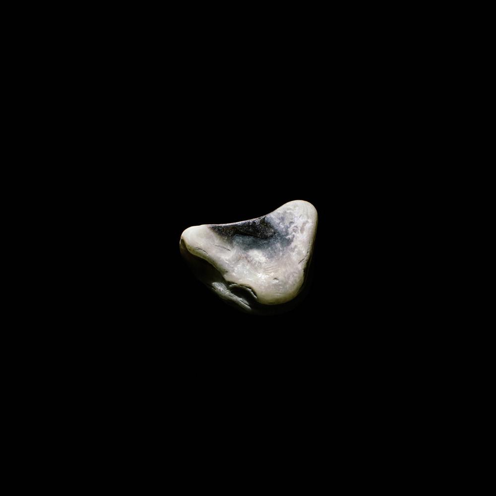shell-32.jpg