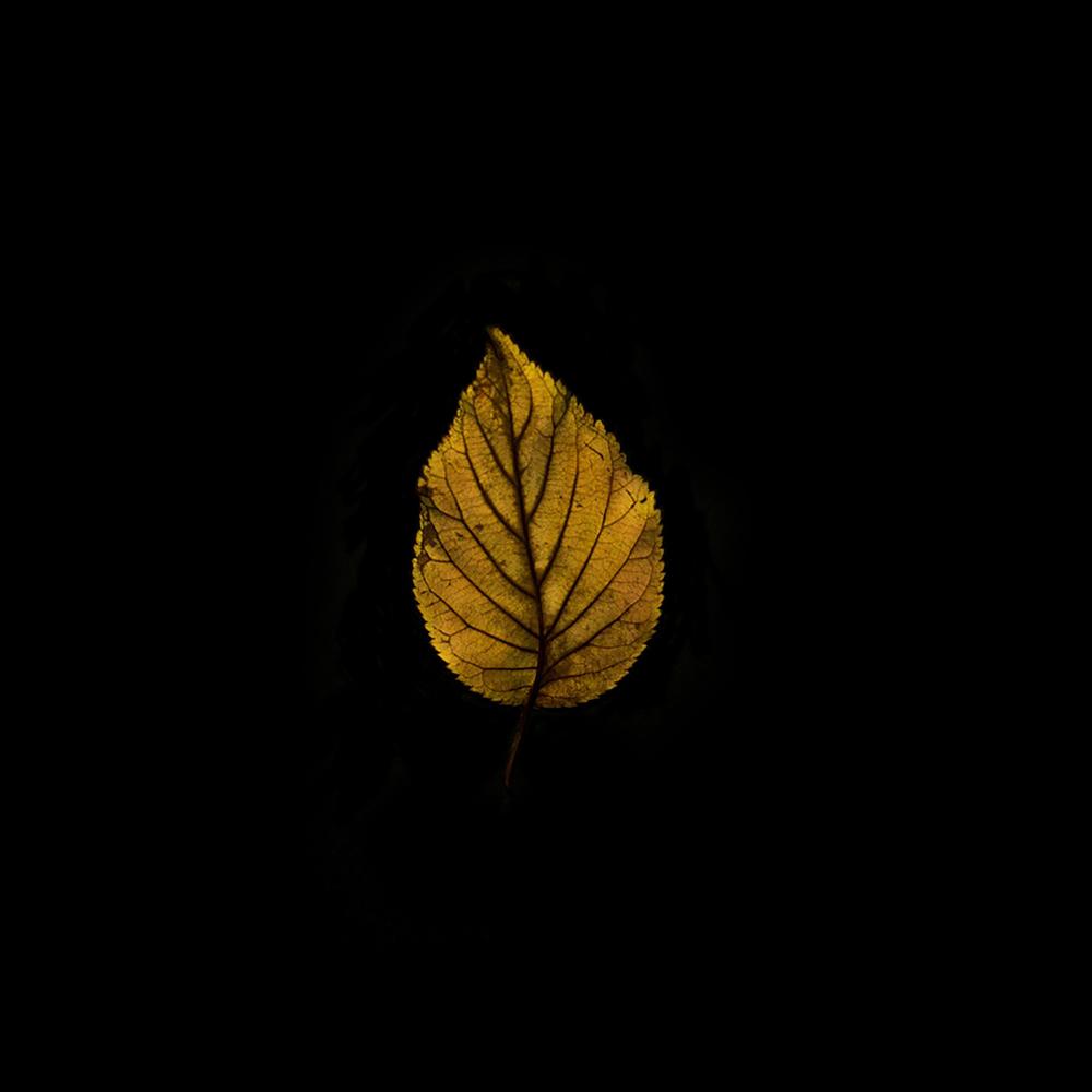 Leaf-30.jpg