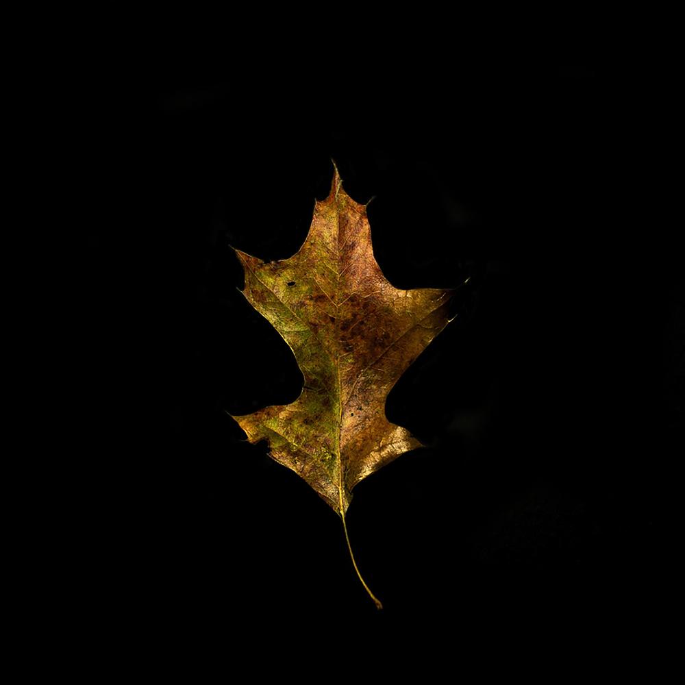 Leaf-29.jpg
