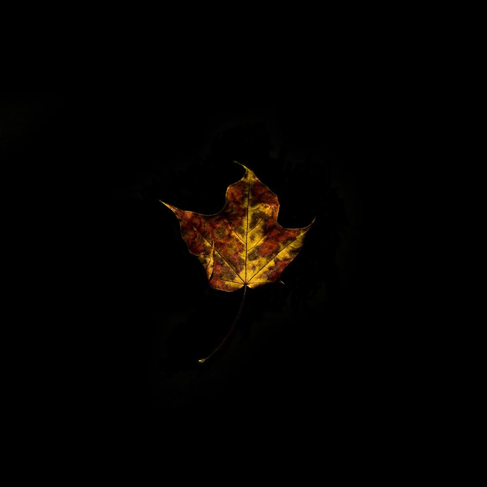 Leaf-32.jpg