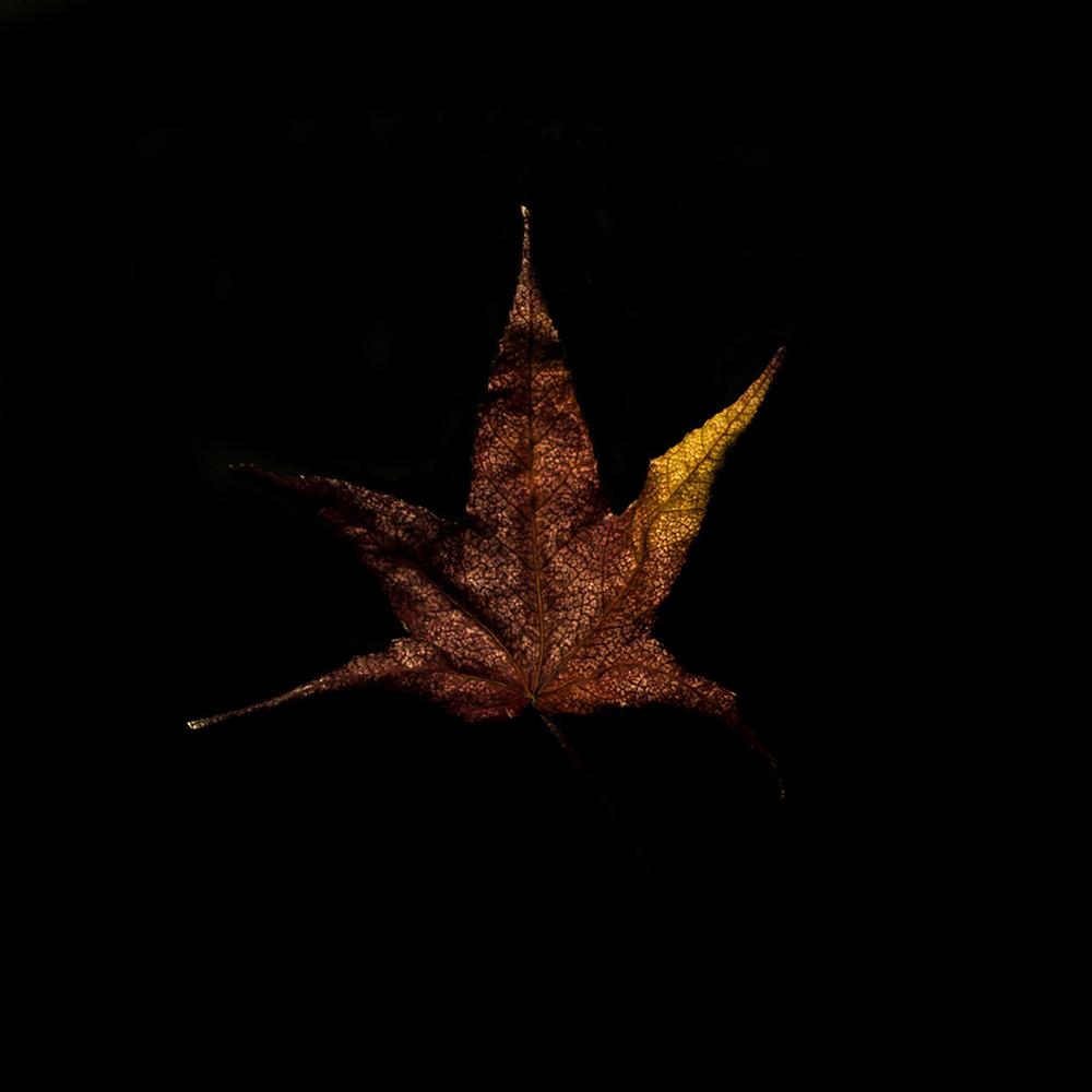Leaf-36.jpg