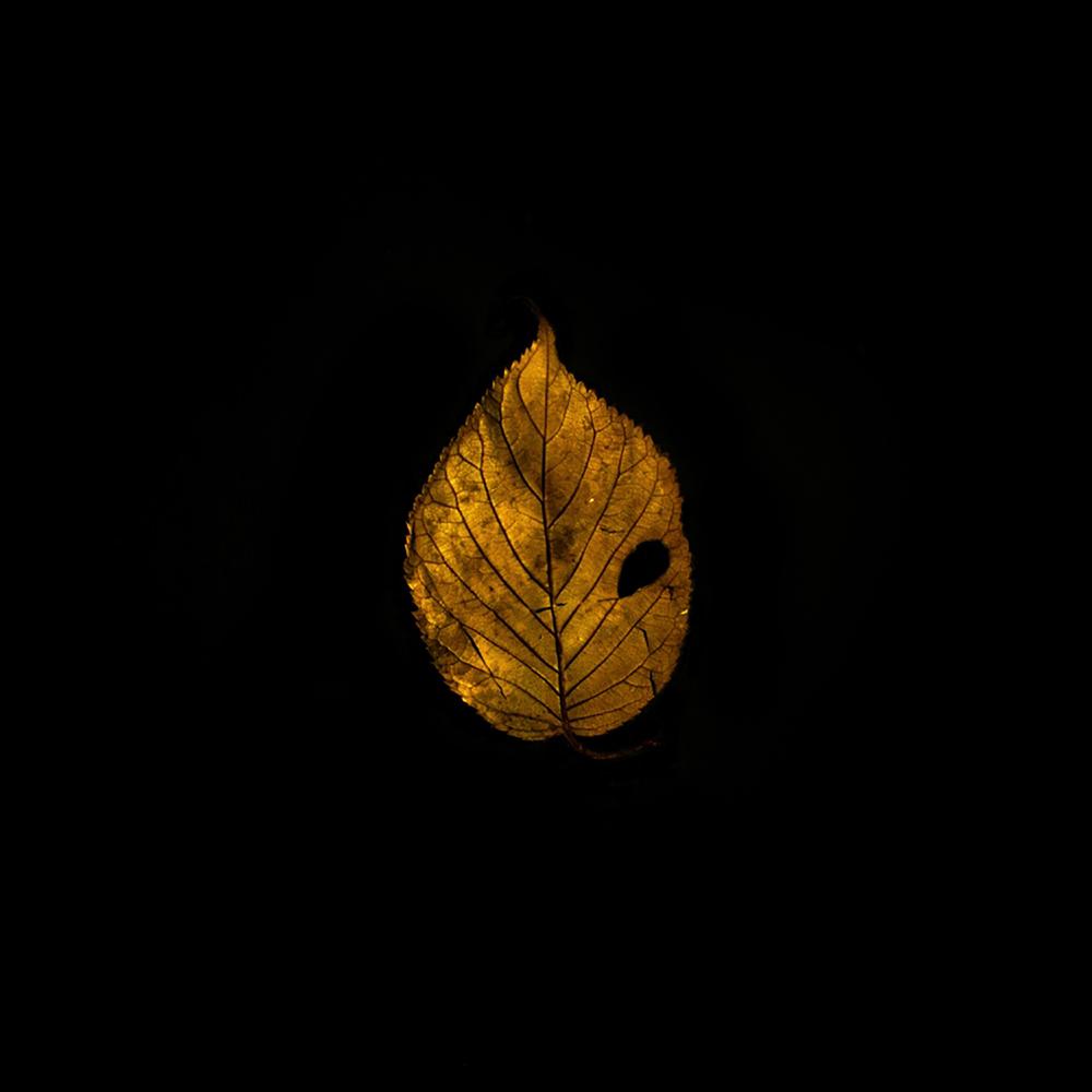Leaf-38.jpg