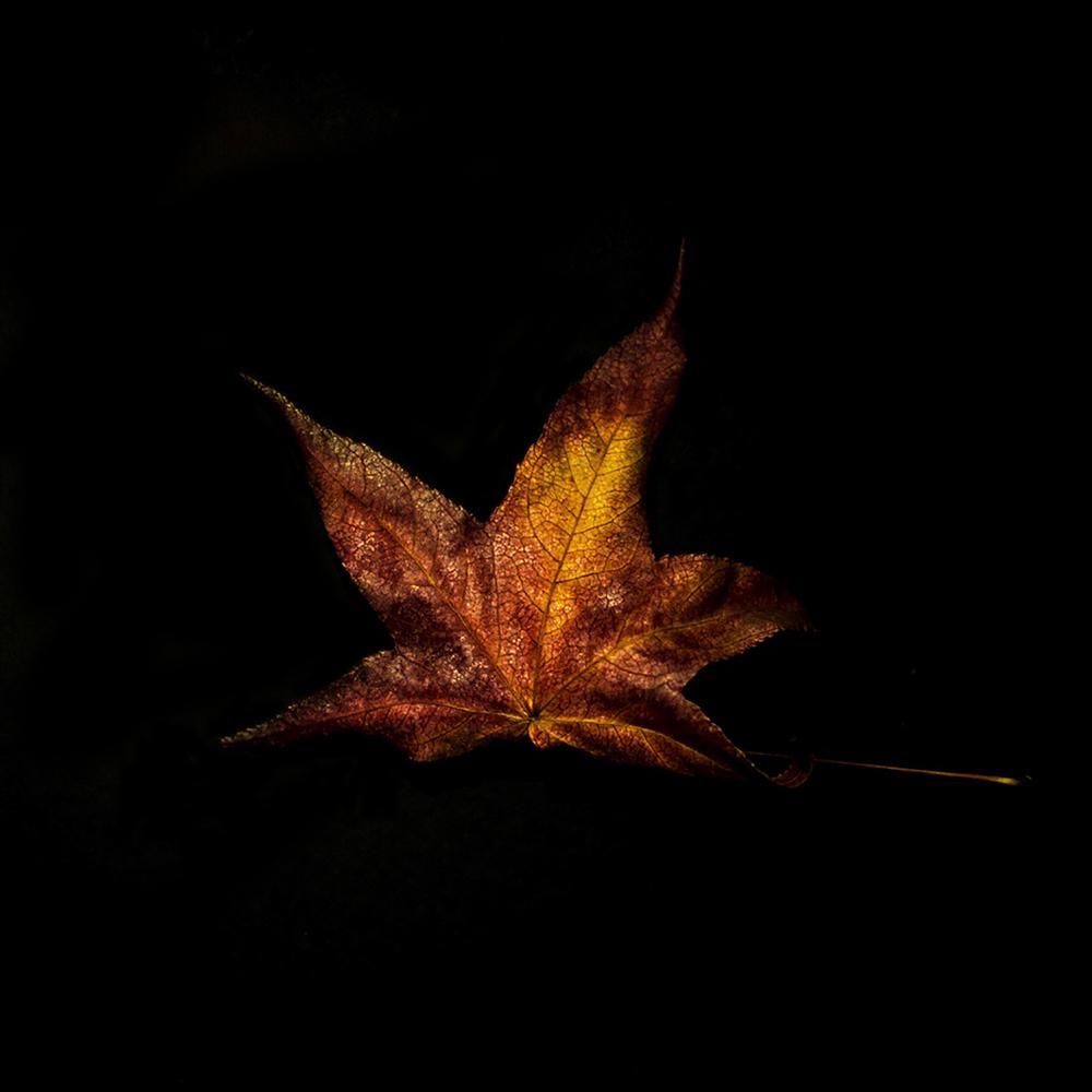 Leaf-39.jpg