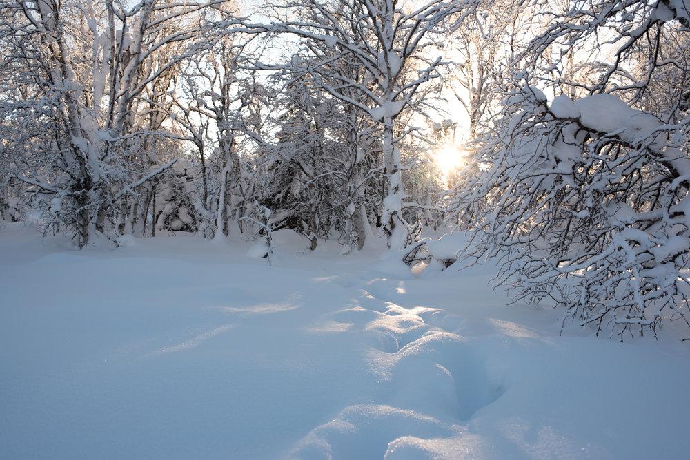 snowshoe-1.jpg