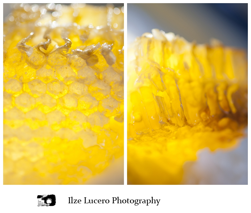 Jodi Bee Honey Farm, Ilze lucero photography